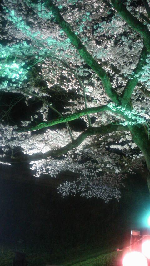 夜桜…(≧∇≦)